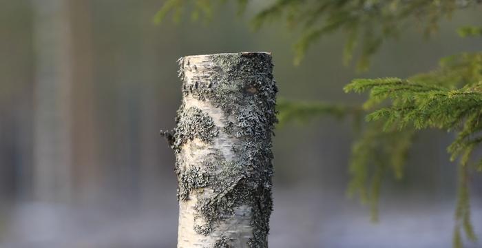Tekopökkelöistä lahopuuta metsiin