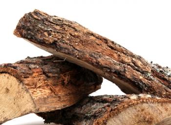 Puu tuotti energiaa ennätysmäärän