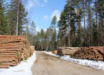 Puuta riittää myös energiantuotantoon