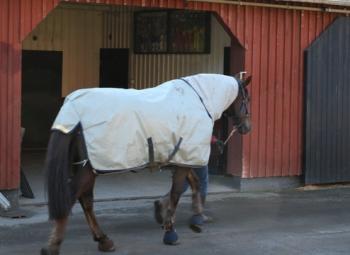 Voimalaitospolttoainetta hevosen lannasta
