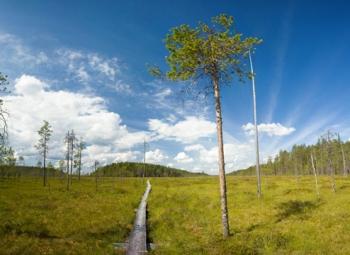 Puuta ja turvetta lisää