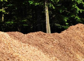 Bioenergian kestävyys varmistettava