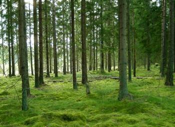 Metsät kasvavat kohisten