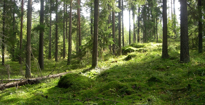 Metsä ja puutuotteet tehokkaita hiilivarastoja