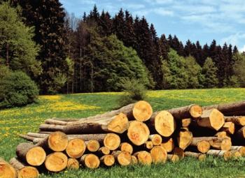Unionille yhteinen metsäpolitiikka?