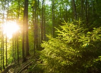 Metsien käyttö voi jatkua
