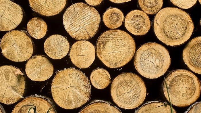 Biomassa taas tikunnokassa